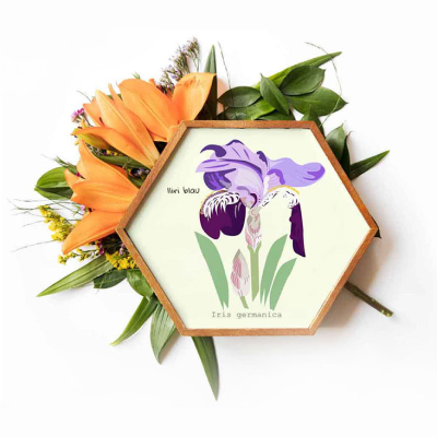 Flores | rosasunba