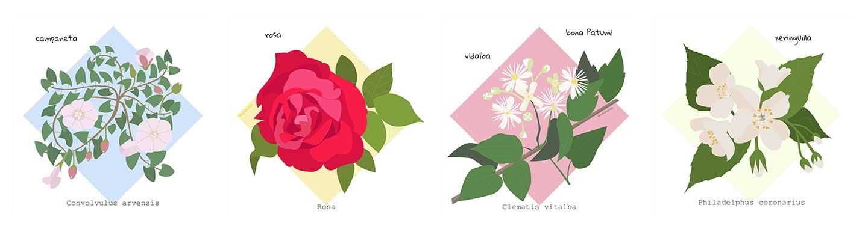 Flors de maig | rosasunba